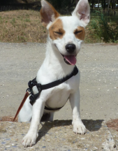 gaia jack russell